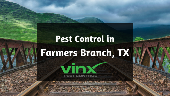 Pest control in Farmers Branch TX