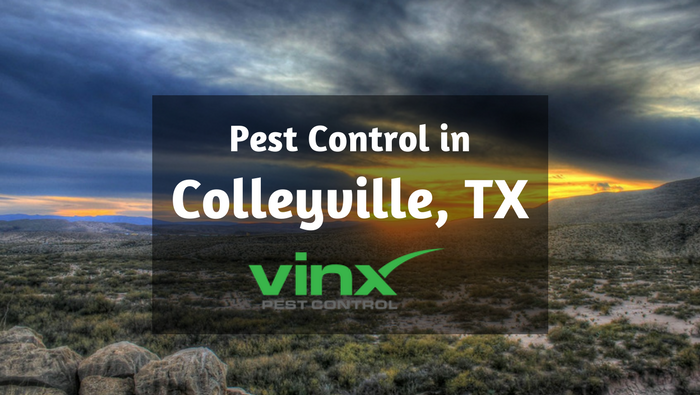 Pest control Colleyville