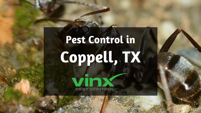 Pest Control in Coppell TX