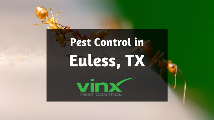 Pest control in Euless, TX