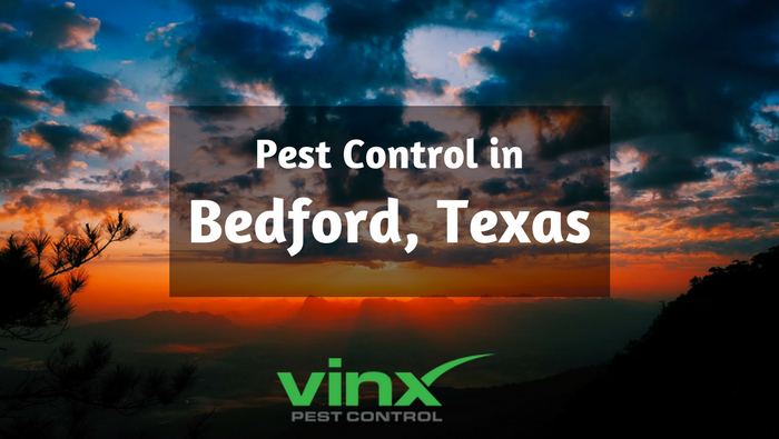Pest Control in Bedford, TX