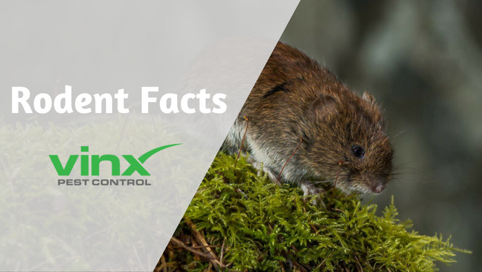 6 Things You Didn't Know About Rodents