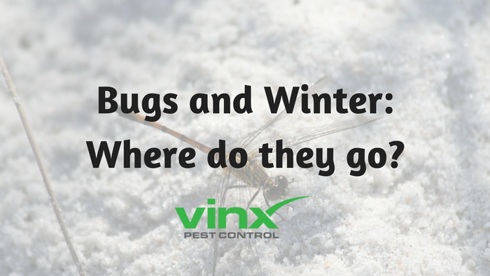 Bugs and Winter: Where Do They Go?