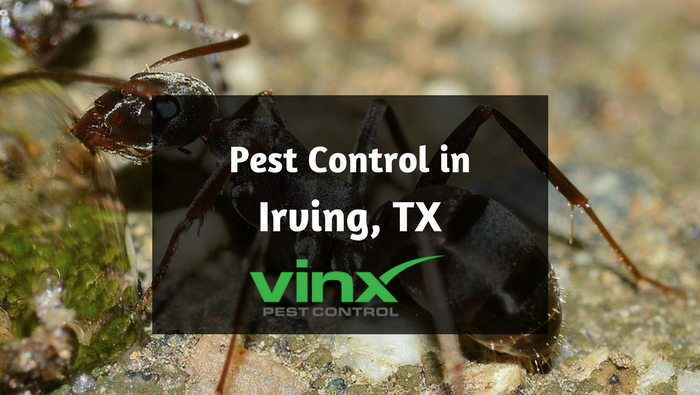 Pest Control in Irving, TX