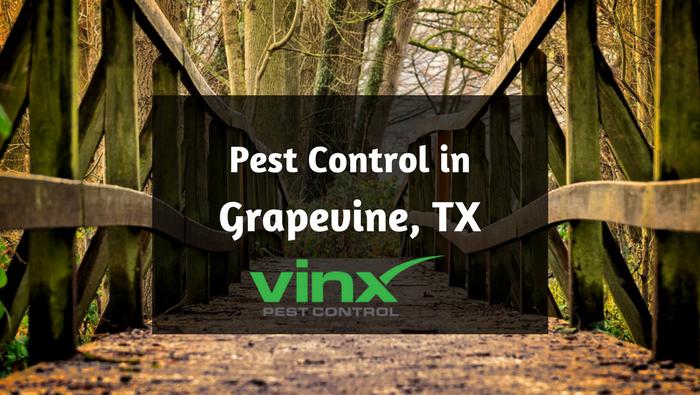 Grapevine Pest Control