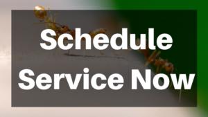 Schedule service now