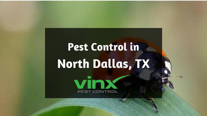 North Dallas, TX pest control