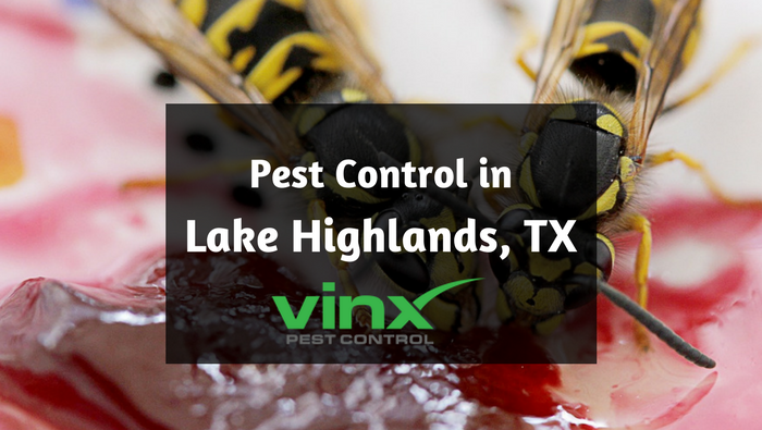 Lake Highlands, TX pest control