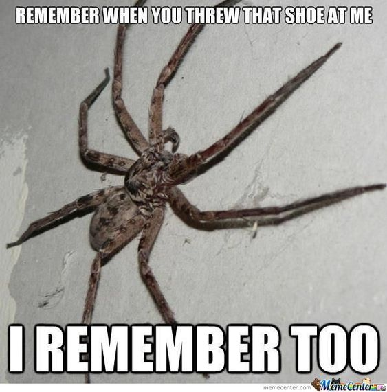Legs For Days…How To Get Rid of Spiders