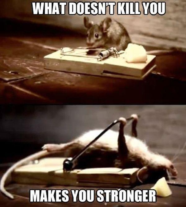 Mice, Mice, Baby