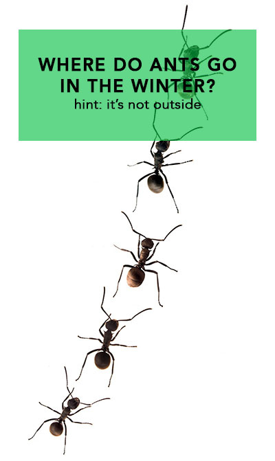 The Ants Go Marching…