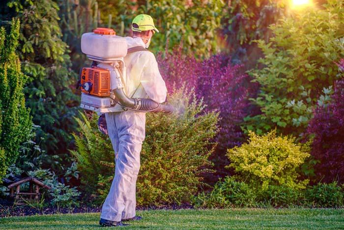 dallas mosquito control