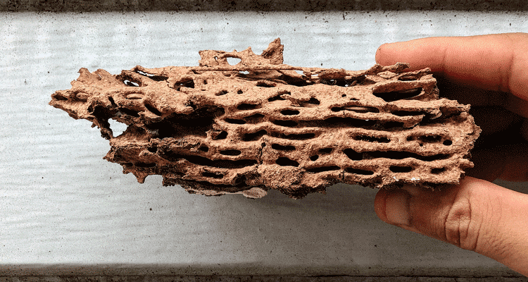 Wood destroyed by termites