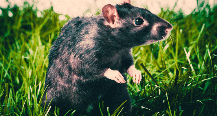 How to control pests and rodents