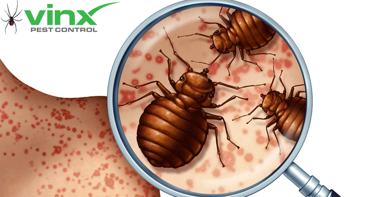 What Are Bed Bugs? How To Identify Bed Bug Bites in 10 Steps