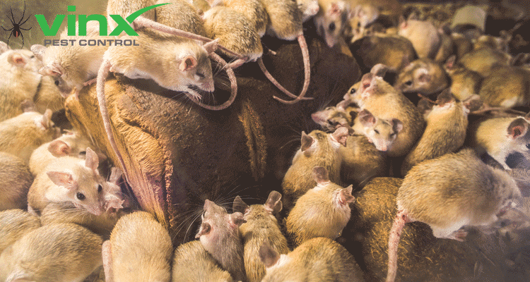 How To Get Rid Of Mice In The Attic, Car, and More: The Ultimate Guide