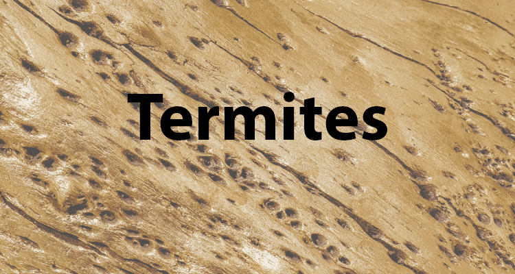 Termite Swarming Season: The Top 10 Things You Need to Know