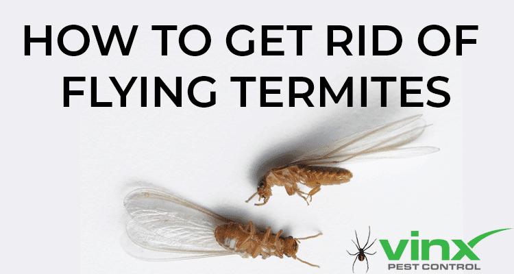 How To Get Rid of Flying Termites