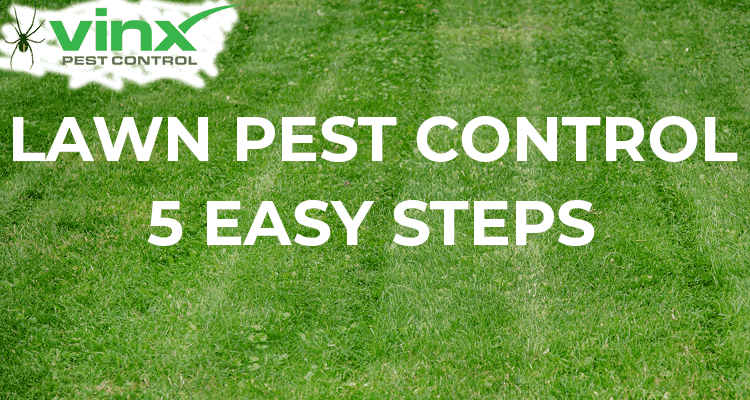 5 Easy Steps to Lawn Pest Control