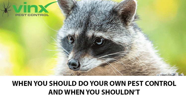 When You Should Do Your Own Pest Control (And When You Shouldn't)