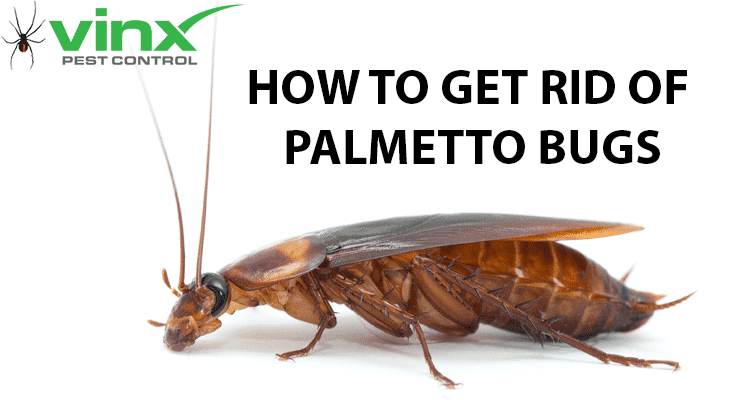 How to Get Rid of Palmetto Bugs: The Ultimate Guide