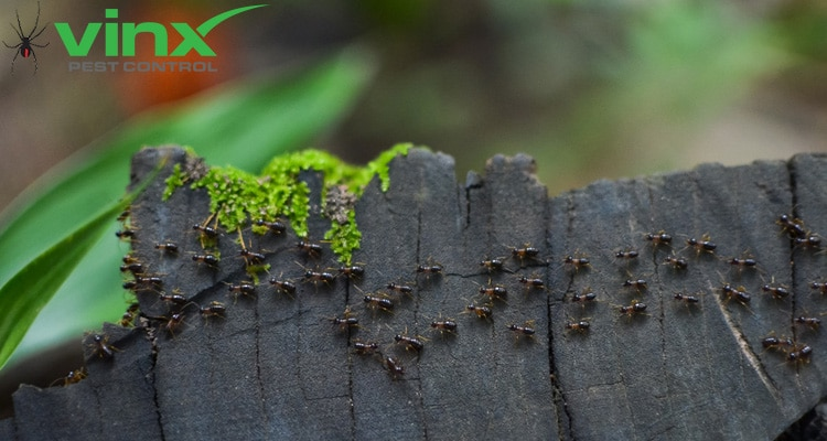 The Difference Between Carpenter Ants and Termites