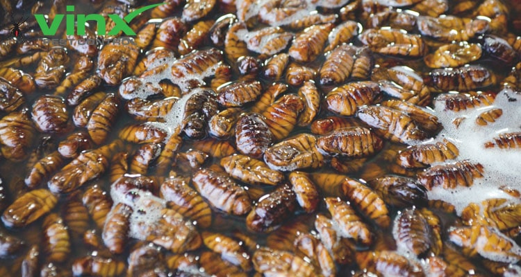 How To Get Rid of A Heavy Roach Infestation